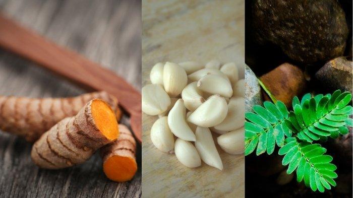 Temulawak dan 5 Jenis Tanaman Herbal yang Bisa Cegah Infeksi Virus Corona, Terbukti Perkuat Imunitas