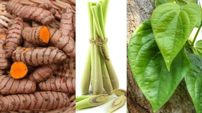Cara Membuat Jamu Temulawak untuk Obat Batuk dan 7 Tanaman Herbal Lain yang Mudah Ditemukan