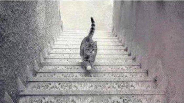 Tes Kepribadian Psikologi - Ke Arah Mana Kucing Berjalan? Jawabanmu Ungkap Karakter dalam Dirimu
