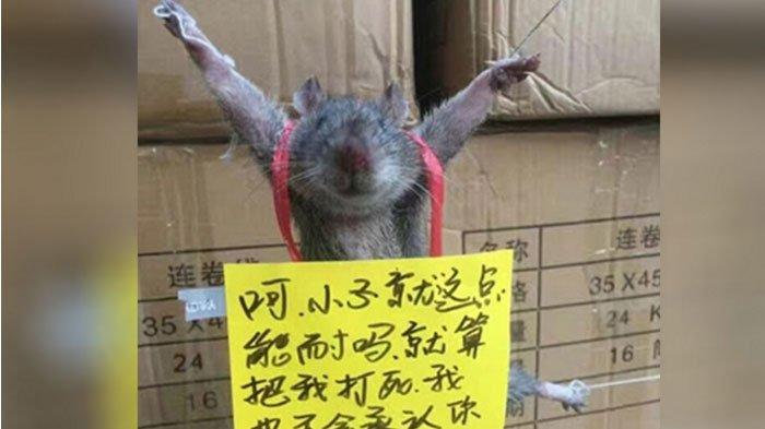 Semula Dikira Lelucon, Setelah Diselidiki Kisah Tikus Ini Bikin Haru Netizen