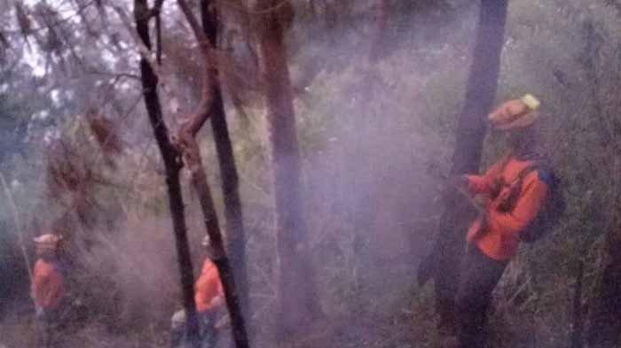 Rantai Makanan Terancam Terputus Karena Kebakaran di Hutan di Batu