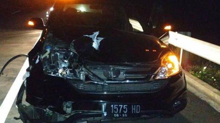 Pengemudi CR-V asal Sumenep Tabrak Sapi yang Tiba-tiba Jatuh di Jalan Tol Probolinggo - Pasuruan