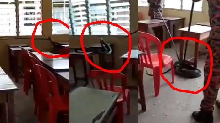 Viral Kondisi Sekolah Selama Pandemi Kosong 3 Bulan, Ular Besar Ditemukan Bersarang di Laci Meja