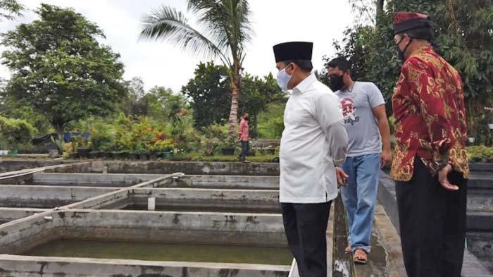 Pengusaha Ikan Hias Ikan Koi di Banyuwangi Alami Kenaikan Omzet 25 Persen Meski di Masa Pandemi