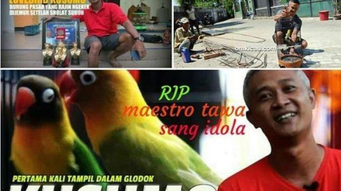 Video Kicauan Lovebird Kusumo yang Ditawar Rp 2,2 Miliar & Viral, Muncul Tagar #RIPLovebirdKusumo