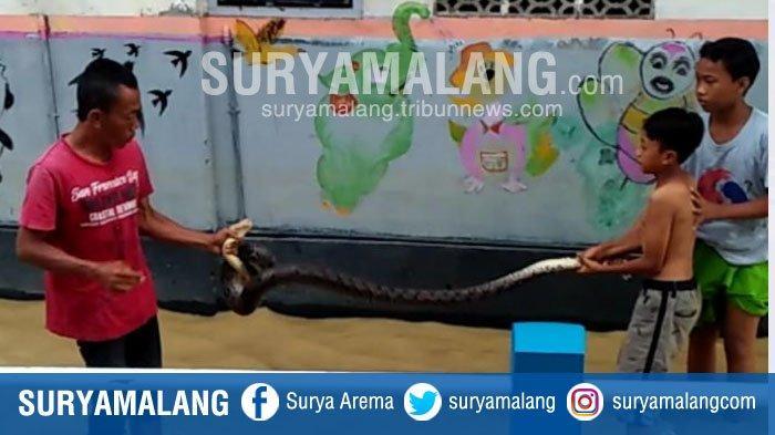 Warga Tangkap Ular Piton Sepanjang 3 Meter di Tengah Banjir Sampang
