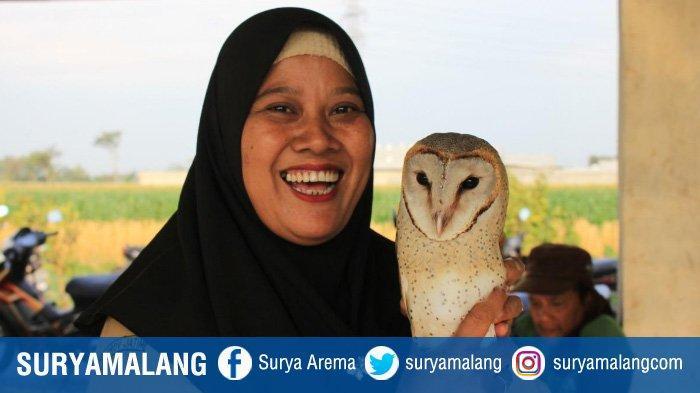 Petani di Kediri Manfaatkan Burung Hantu untuk Memberantas Hama Tikus di Sawah