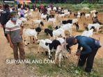 aktivitas-pasar-hewan-di-gandusari-kabupaten-trenggalek.jpg