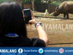 badak-india-berthus-dalam-peringatan-hari-badak-sedunia-di-batu-secret-zoo-kota-batu_20180922_180724.jpg
