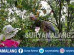 balai-penelitian-tanaman-jeruk-dan-buah-subtropika-balitjestro-desa-tlekung-kota-batu_20180715_113423.jpg