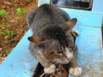 berita-malang-kucing-setiaa-pada-majikan_20160909_095816.jpg