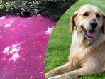 berita-peristiwa-malang-anjing-temukan-perubahan-warna-air-sungai_20161017_184234.jpg