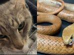 berita-ular-dan-kucing-yang-berkelahi-hingga-tewas.jpg