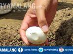 bksda-meninjau-lokasi-penemuan-telur-27-butir-di-bantaran-bengawan-solo-di-dusun-klagen-lamongan.jpg