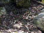 desa-yang-memiliki-75000-ular-di-kanada_20171009_140535.jpg