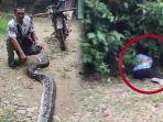 detik-detik-supriadi-selamatkan-istrinya-dari-lilitan-ular-piton-sepanjang-6-meter-kepala-ditebas.jpg