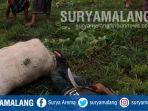 disambar-petir-di-kabupaten-malang-mayat-pegang-celurit_20181108_202438.jpg