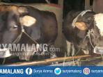 dua-ekor-sapi-milik-warga-gondanglegi-kabupaten-malang-yang-dicuri_20170711_200835.jpg