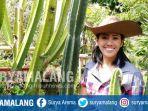 dwi-lily-indayani-kaktus-koboi-alias-cereus-peruvianus-dari-texas-di-kediamannya-kota-batu_20180828_165225.jpg