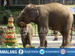 gajah-ulang-tahun-batu_20180707_195348.jpg
