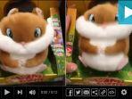 hamster_20170104_230002.jpg