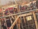 harimau-sirkus-mengamuk-di-tiongkok_20171128_093518.jpg