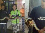 heboh-temuan-ular-raksasa-di-wendit-lanang-pakis-kabupaten-malang_20180220_101323.jpg