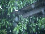 hujan-di-kawasan-karhutla.jpg