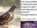 ilustrasi-burung-dara-atau-merpati-kiri-postingan-dwi-lisma-kanan-di-facebook.jpg
