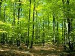 ilustrasi-hutan-belantara-rimba_20160603_142620.jpg