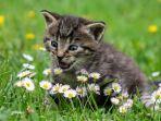ilustrasi-kucing-lucu-cute-cat.jpg