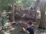 kebun-kelapa-sawit-di-kabupaten-malang.jpg