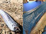kemunculan-oarfish-yang-dianggap-jadi-pertanda-gempa-dan-tsunami-di-jepang.jpg