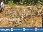kholik-35-tewas-tertimpa-pohon-jati-di-desa-palalang-kecamatan-pakong-pamekasan.jpg