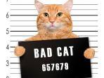 kucing-dipenjara-karena-lakukan-tindakan-kriminal_20170529_145703.jpg