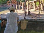 libur-lebaran-kebun-binatang-surabaya-kbs.jpg