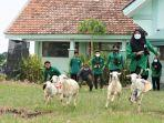 lomba-balap-kambing-bernama-mbek-cup-2021-di-halaman-smk-muhammadiyah-5-gresik.jpg