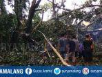 mahasiswa-tewas-pohon-tumbang-kediri.jpg
