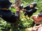 makhluk-misterius-di-nagari-ampek-koto-palembayan-kecamatan-palembayan-kabupaten-agam.jpg