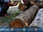 maling-kayu-blandong-warga-pilangkenceng-kabupaten-madiun.jpg