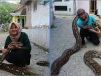 munding-aji-30-yang-mengoleksi-10-ular-piton-besar-kanan_20180710_174500.jpg