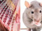 nasib-apes-nenek-kehilangan-uang-yang-ada-di-lemari-setelah-2-tahun-baru-ketahuan-dimakan-tikus.jpg