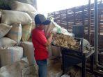 pakan-ternak-dari-limbah-bonggol-jagung_20181015_142212.jpg
