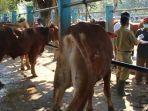 pasar-hewan-ngadiluwih-kabupaten-kediri-penjualan-hewan-kurban-idul-adha.jpg