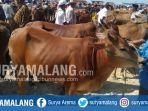 pedagang-sapi-di-pasar-hewan-sampang-di-desa-aing-sareh-kecamatankabupaten-sampang.jpg