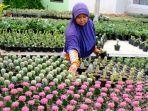 pekerja-merapikan-bunga-kaktus-di-desa-punten-kota-batu-sebelum-pandemi.jpg