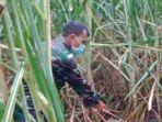penemuan-tulang-belulang-mayat-pria-di-ladang-tebu-desa-patemon-kecamatan-tanggul-jember.jpg