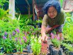 penjual-bunga-lavender-di-madiun.jpg