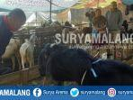 penjualan-hewan-kurban-di-jalan-jonge-kelurahan-sawojajar-kecamatan-kedungkandang-kota-malang.jpg