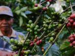 pertanian-kopi-di-kabupaten-malang.jpg